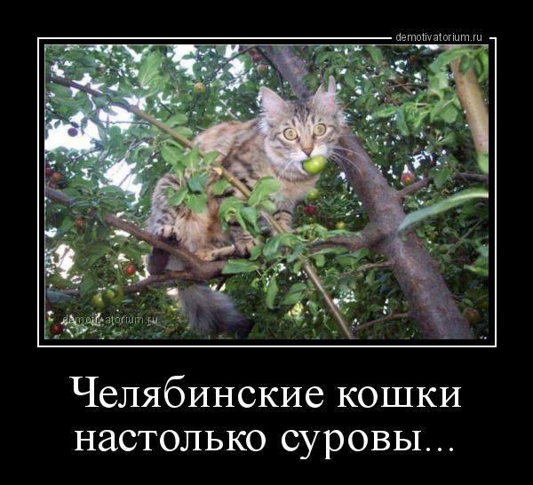 cheljabinskie_koshki_nastolko_surovi_178689.jpg