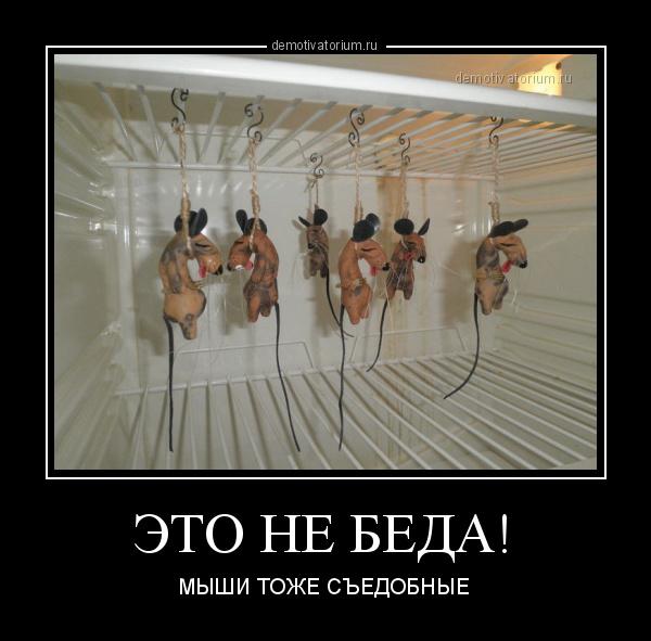 eto_ne_beda_178687.jpg