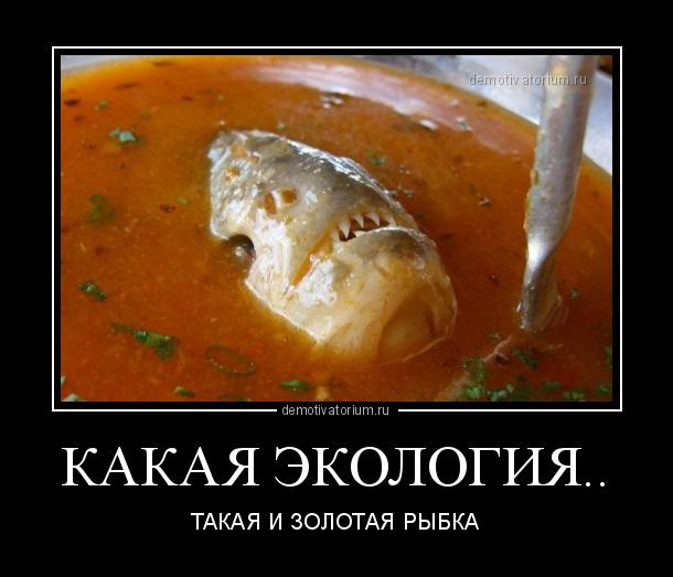kakaja_ekologija_178683.jpg