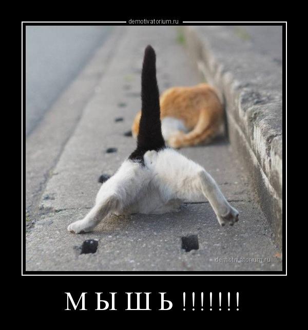 m_i_sh____178667.jpg