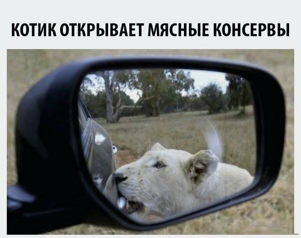 1554563037_prikol-24.jpg
