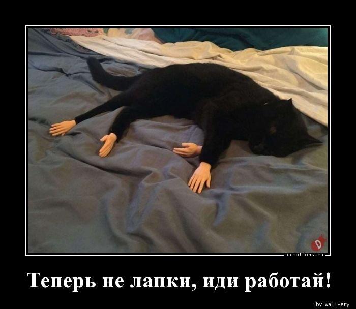 1569826308_demy-13.jpg