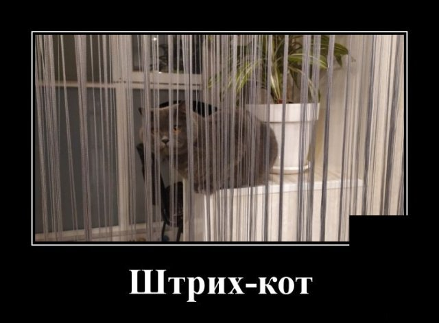 demotivatory_na_sredu_20_foto_5.jpg