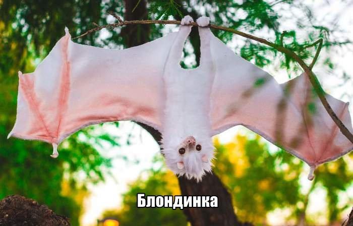 fotopodborka_vtornika_25_foto_14.jpg
