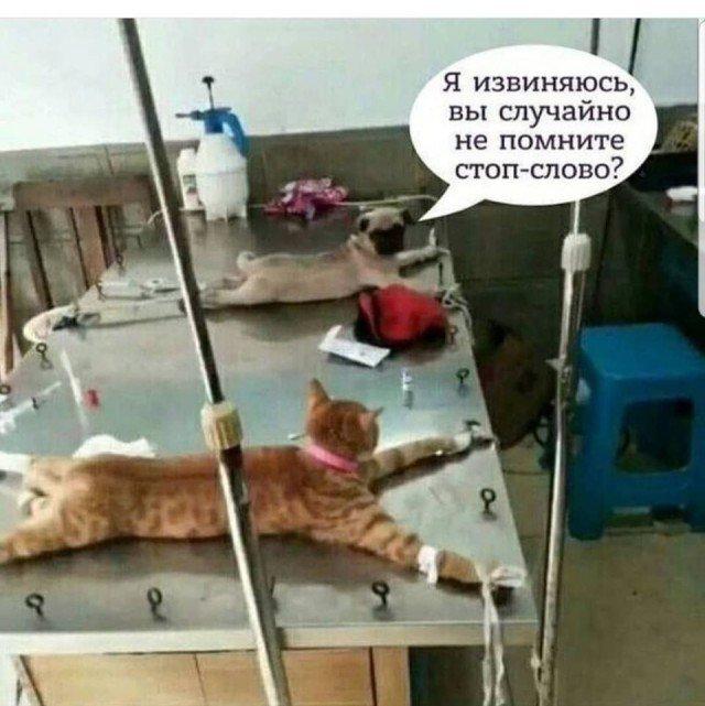 fotopodborka_chetverga_56_foto_1.jpg