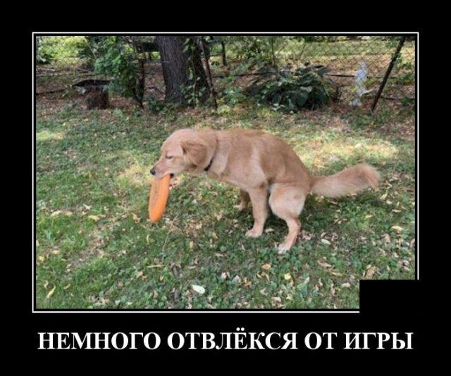 demotivatory_na_sredu_20_foto_9.jpg