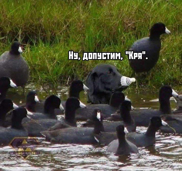 fotopodborka_sredy_48_foto_8.jpg