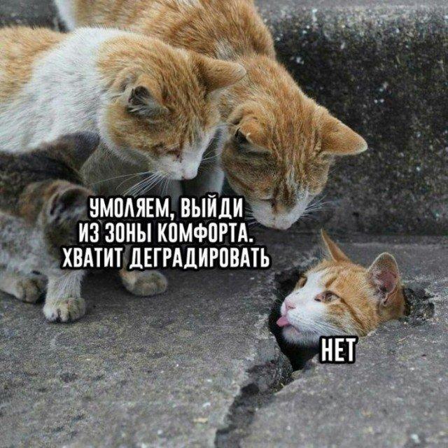 fotopodborka_sredy_52_foto_4.jpg