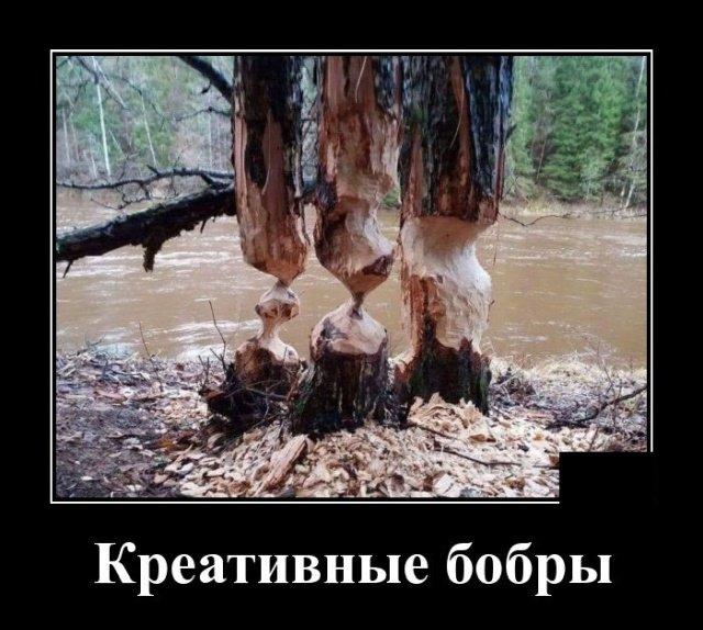 demotivatory_na_chetverg_20_foto_4.jpg