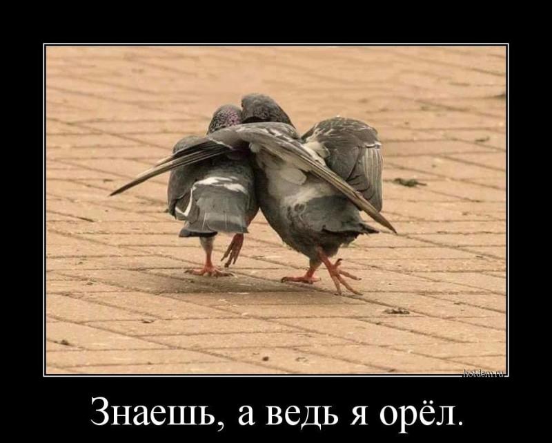 1554965089_demotivatory-1.jpg