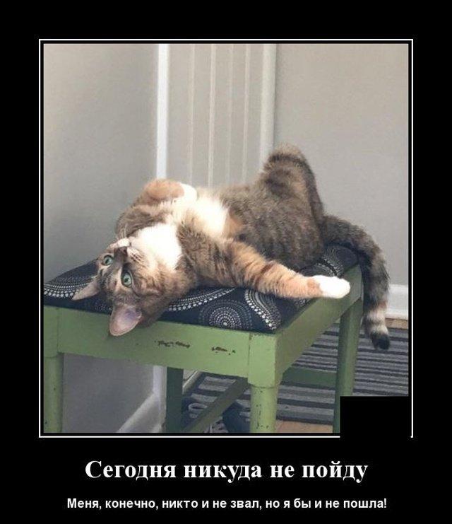 demotivatory_na_vtornik_20_foto_8.jpg