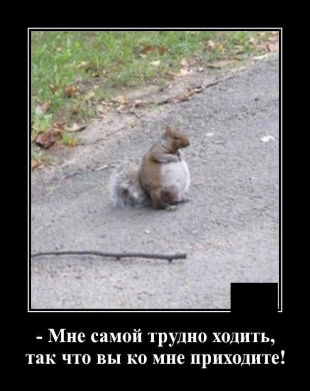 demotivatory_na_vtornik_20_foto_1.jpg