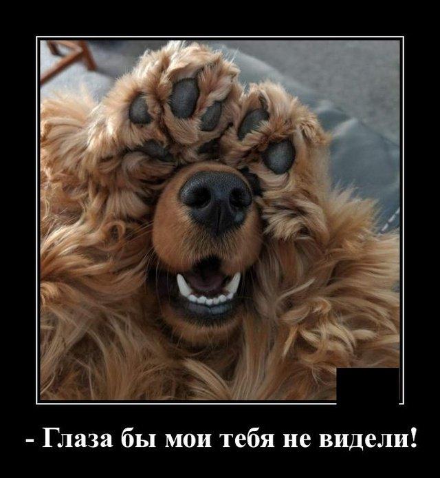 demotivatory_na_vtornik_20_foto_3.jpg