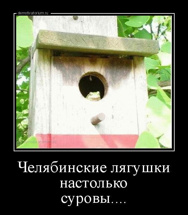 cheljabinskie_ljagushki_nastolko_surovi_181154.jpg