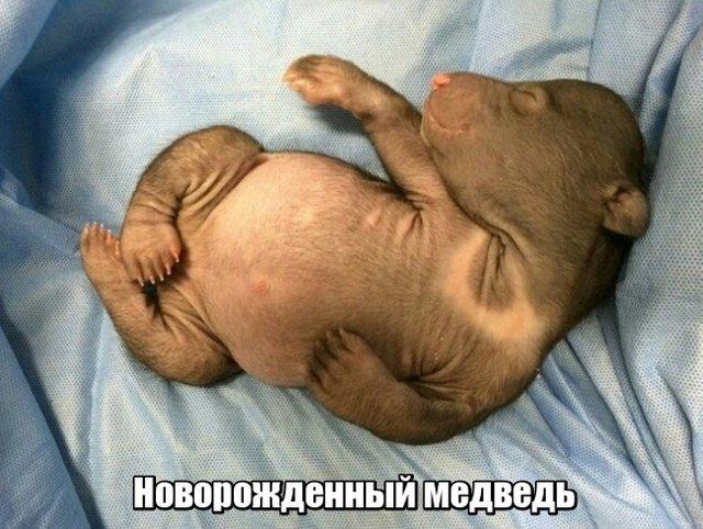 fotopodborka_chetverga_44_foto_18.jpg