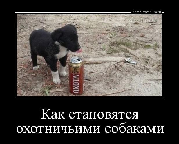 kak_stanovjatsja_ohotnichimi_sobakami_172102.jpg