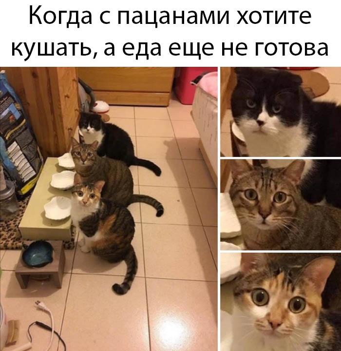 1582734450_podborka-14.jpg