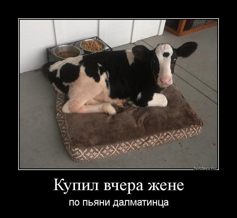 1556778900_demotivatory-18.jpg