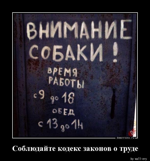 1556865767_demki-6.jpg