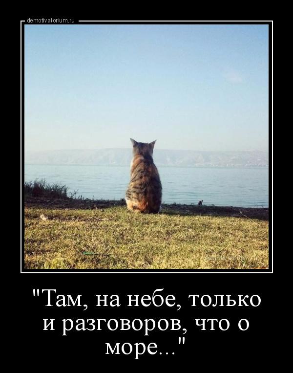 ttam_na_nebe_tolko_i_pazgovopov_chto_o_mopequot_173909.jpg