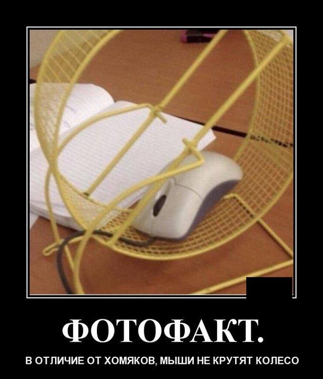 demotivatory_na_vtornik_30_foto_17.jpg
