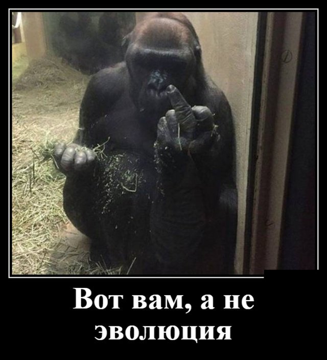 demotivatory_na_vtornik_30_foto_27.jpg