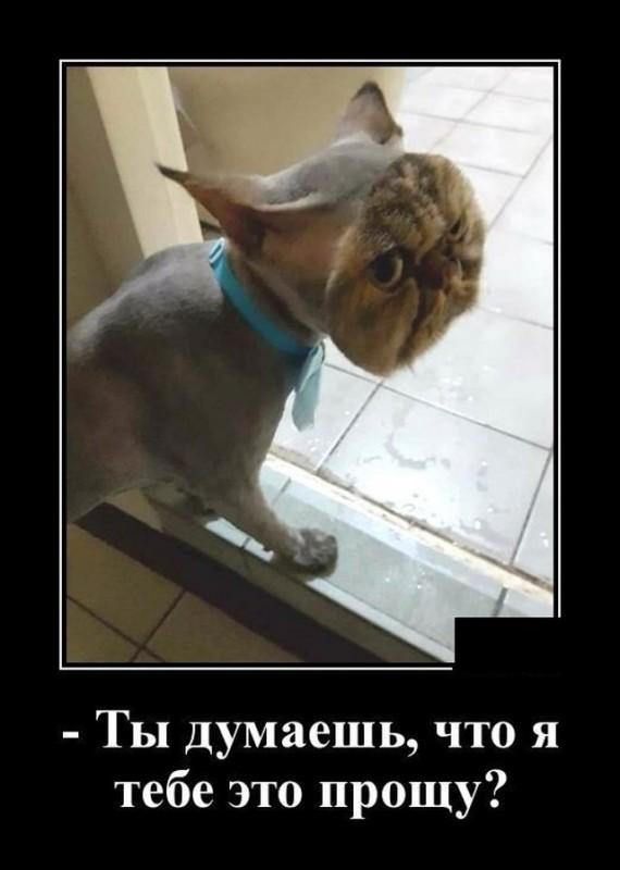 demotivatory_na_sredu_27_foto_14.jpg