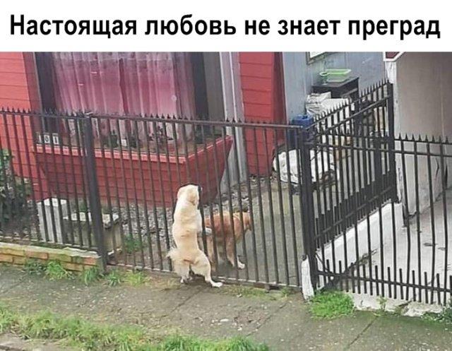 fotopodborka_sredy_47_foto_0.jpg