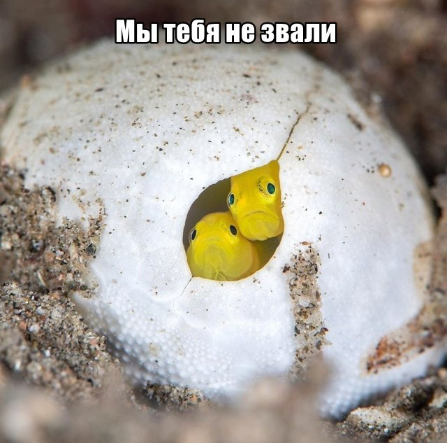 fotopodborka_chetverga_55_foto_2.jpg