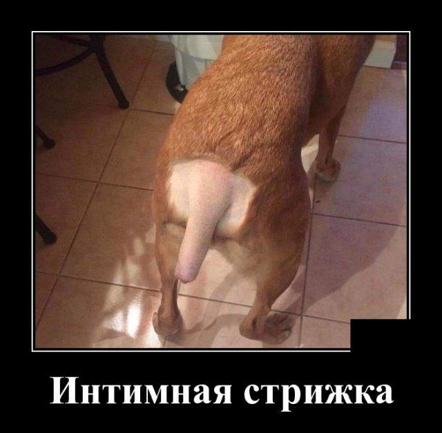 demotivatory_na_pjatnicu_28_foto_20.jpg