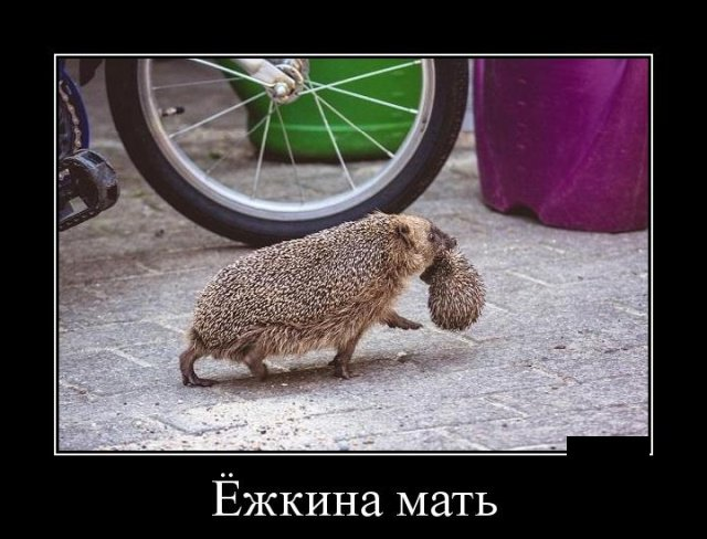 demotivatory_na_pjatnicu_28_foto_25.jpg