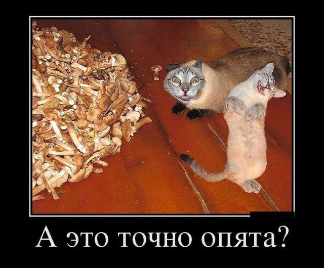 demotivatory_na_ponedelnik_30_foto_1.jpg