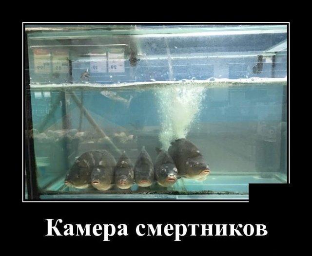 demotivatory_na_ponedelnik_30_foto_4.jpg