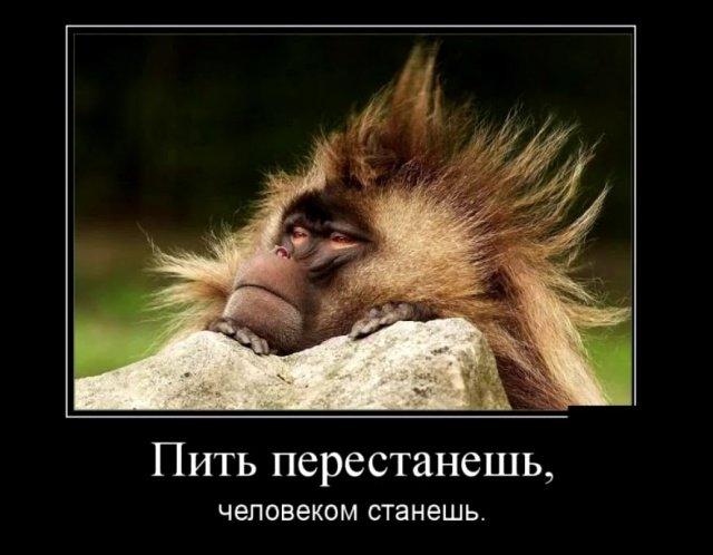 demotivatory_na_ponedelnik_30_foto_28.jpg