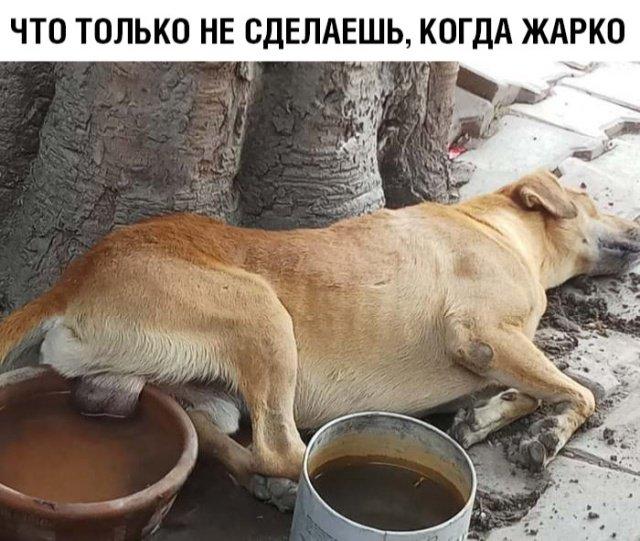 fotopodborka_vtornika_27_foto_27.jpg