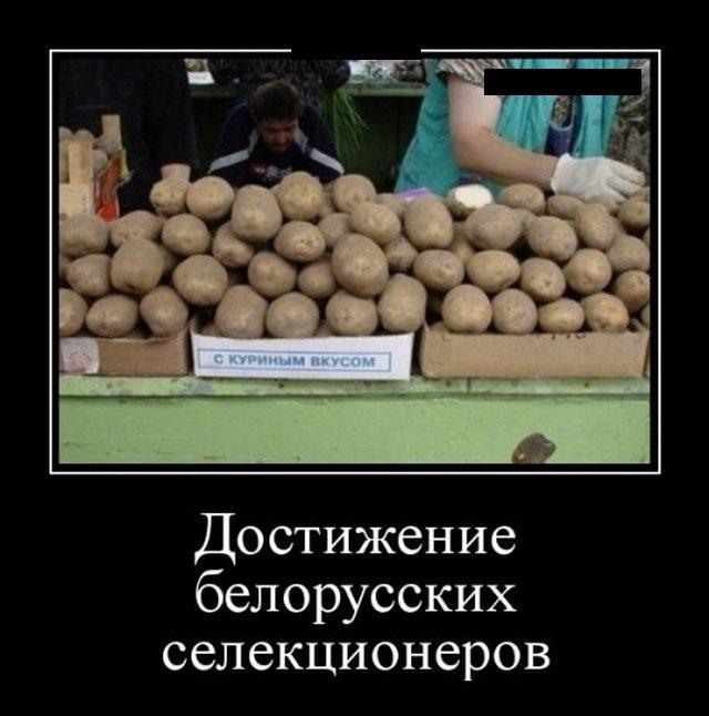 demotivatory_na_ponedelnik_25_foto_12.jpg