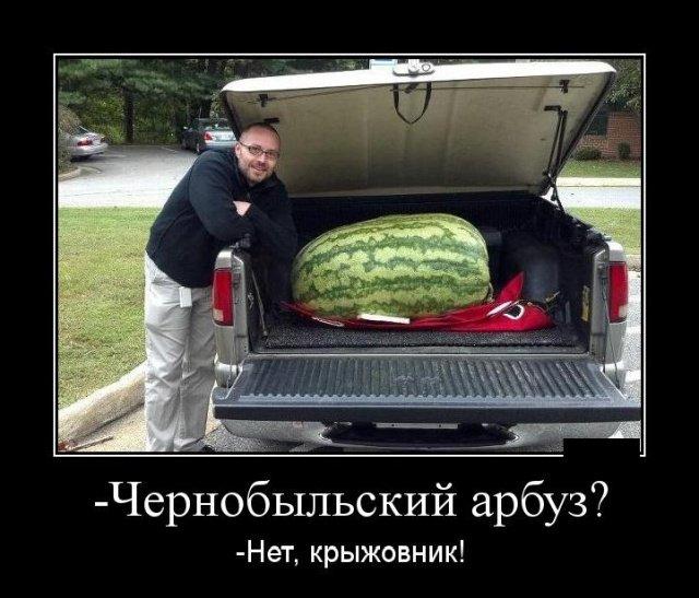 demotivatory_na_vtornik_28_foto_16.jpg