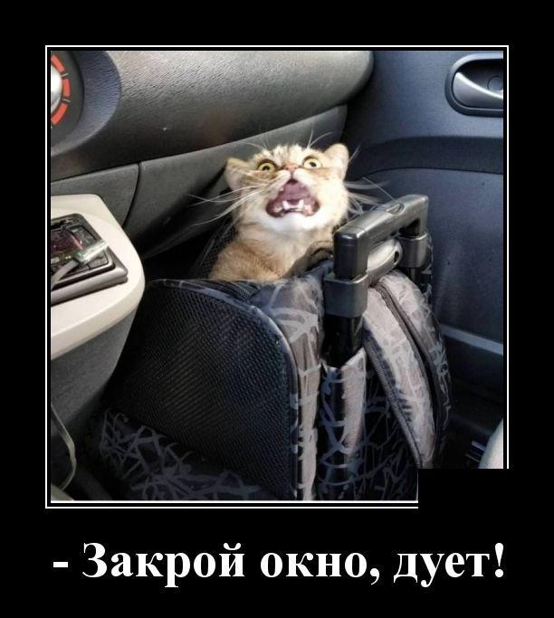 demotivatory_na_chetverg_30_foto_11.jpg
