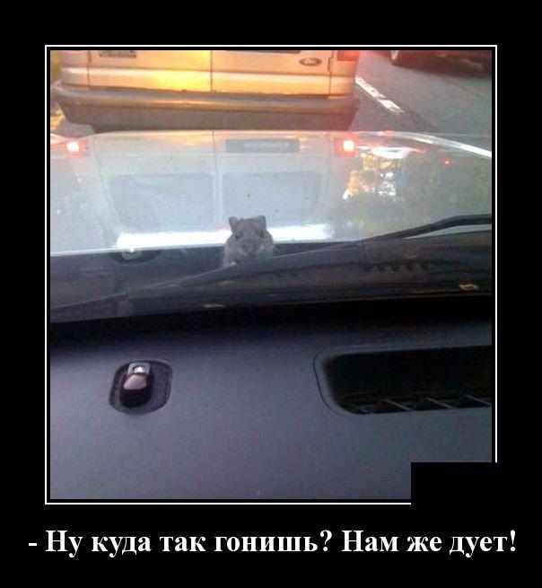 demotivatory_na_sredu_30_foto_18.jpg