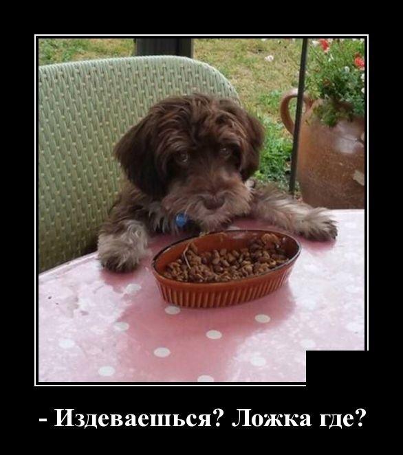 demotivatory_na_sredu_30_foto_27.jpg