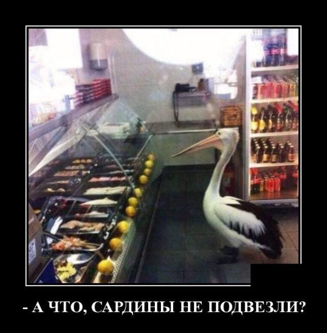 demotivatory_na_ponedelnik_26_foto_5.jpg