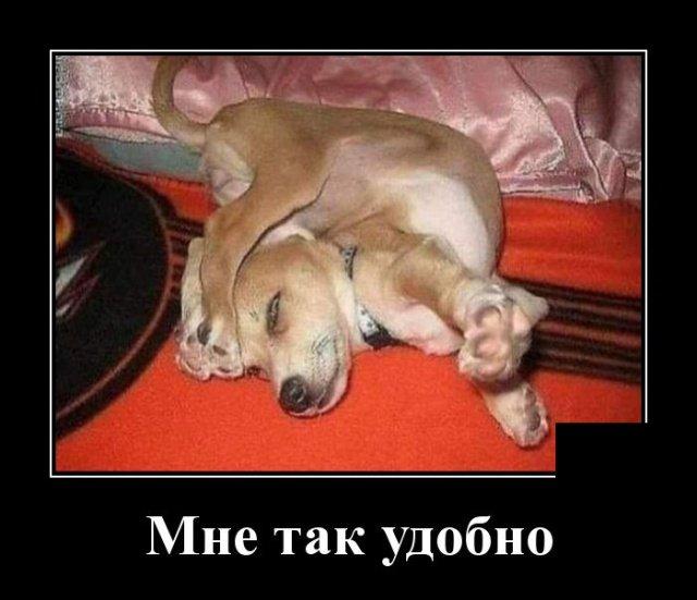 demotivatory_na_vtornik_29_foto_9.jpg