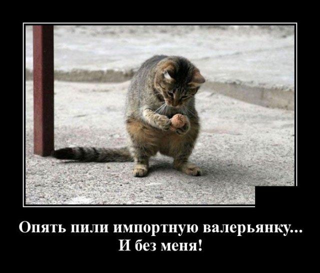 demotivatory_na_vtornik_29_foto_14.jpg