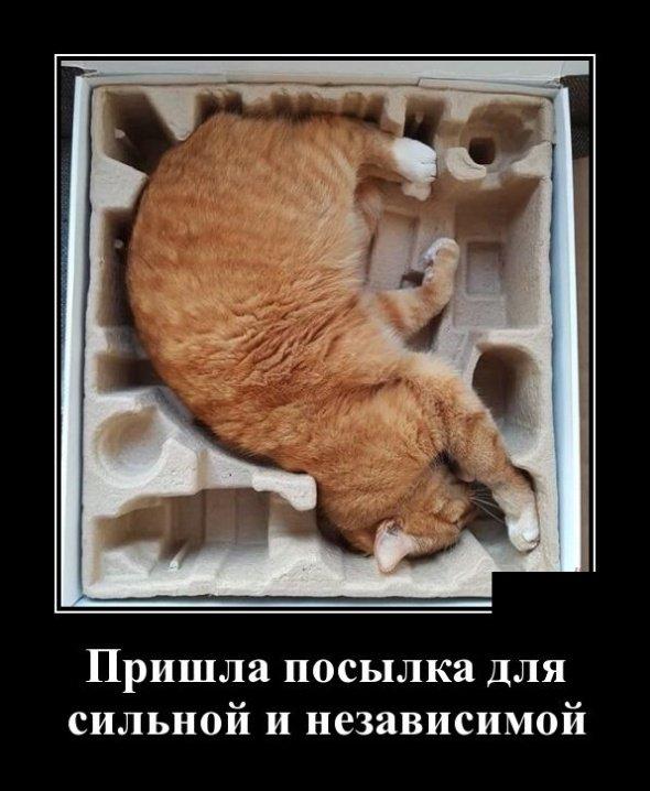 demotivatory_na_chetverg_30_foto_17.jpg