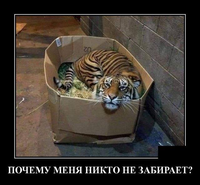 demotivatory_na_ponedelnik_30_foto_19.jpg