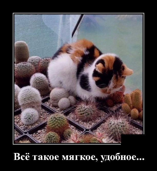 demotivatory_na_vtornik_30_foto_3.jpg