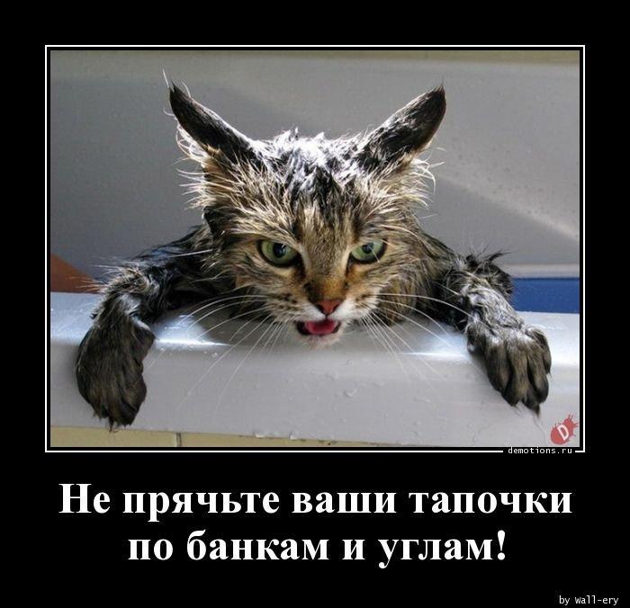 1565333307_demotivatory-2.jpg