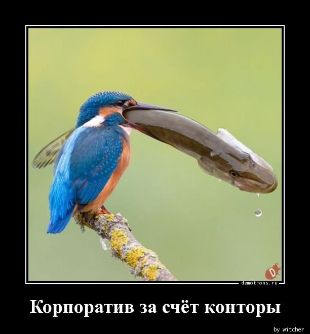 1565333282_demotivatory-6.jpg
