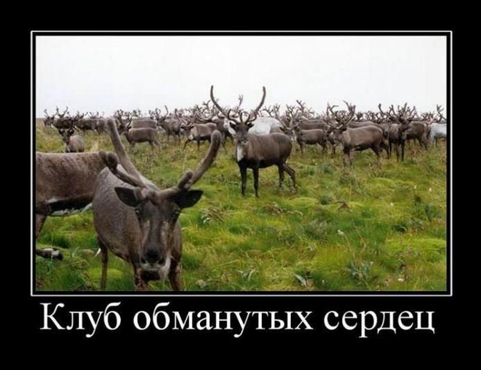 1554104010_demotivatory-1.jpg