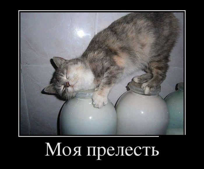 1554361653_demotivatory-5.jpg
